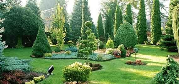 Озеленение территорий и ландшафтный дизайн